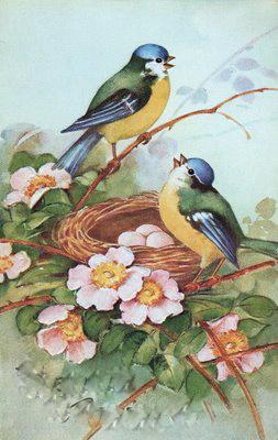 1aaabirdsandnestgfairy005