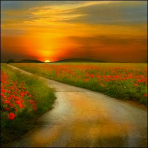 road-with-flowers-on-both-sides-at-sunset4